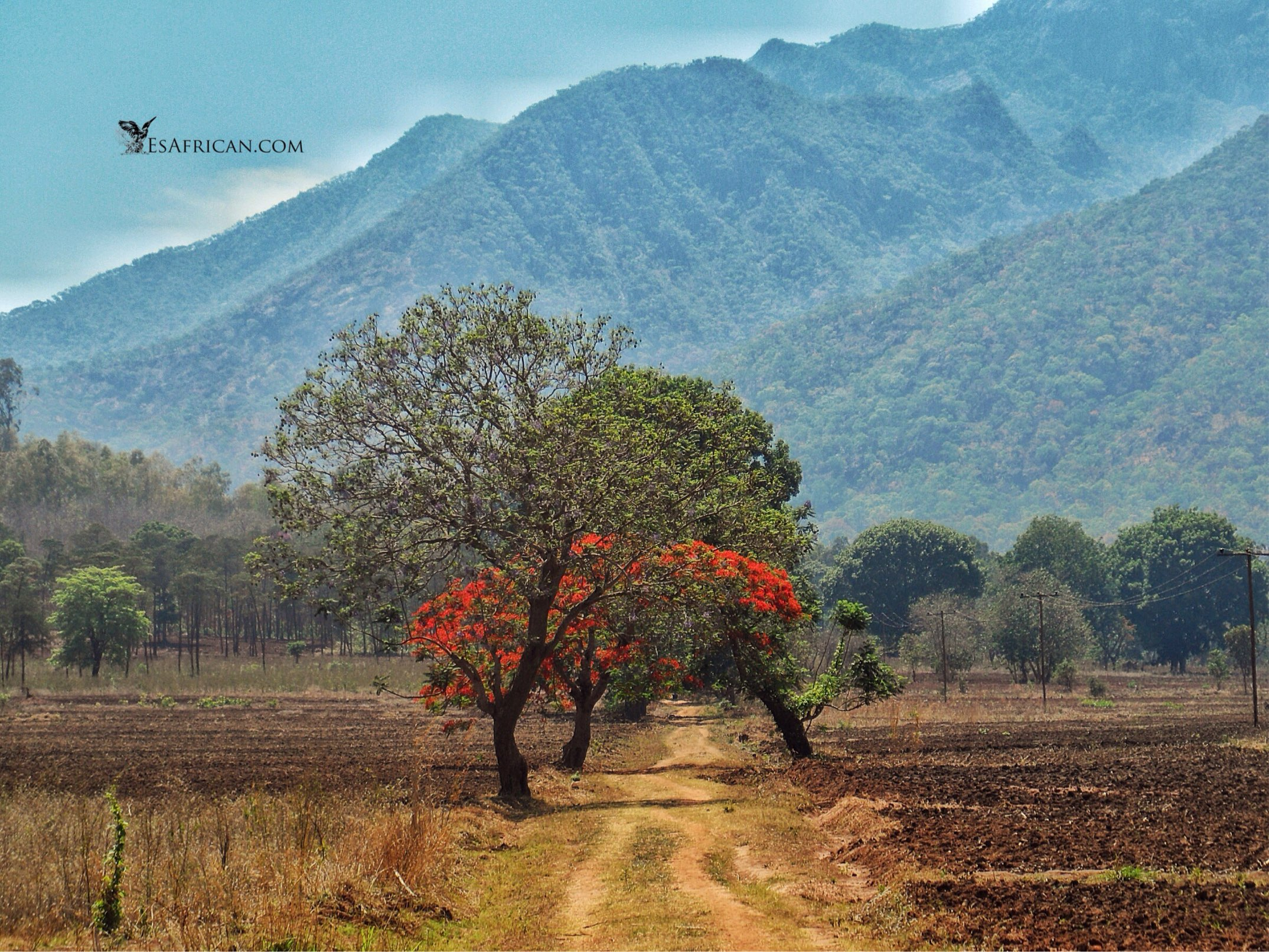 Flame Trees near Mulanje. Many of the most beautiful and surprising places in Malawi are found on the roads less traveled.